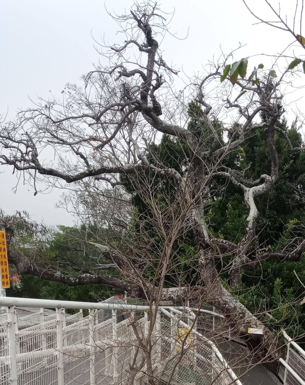 八卦山大佛風景區天空步道3號出口封閉