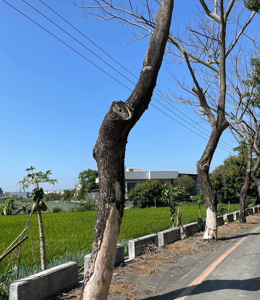 為永續經營公共遊憩品質空間,請珍愛樹木