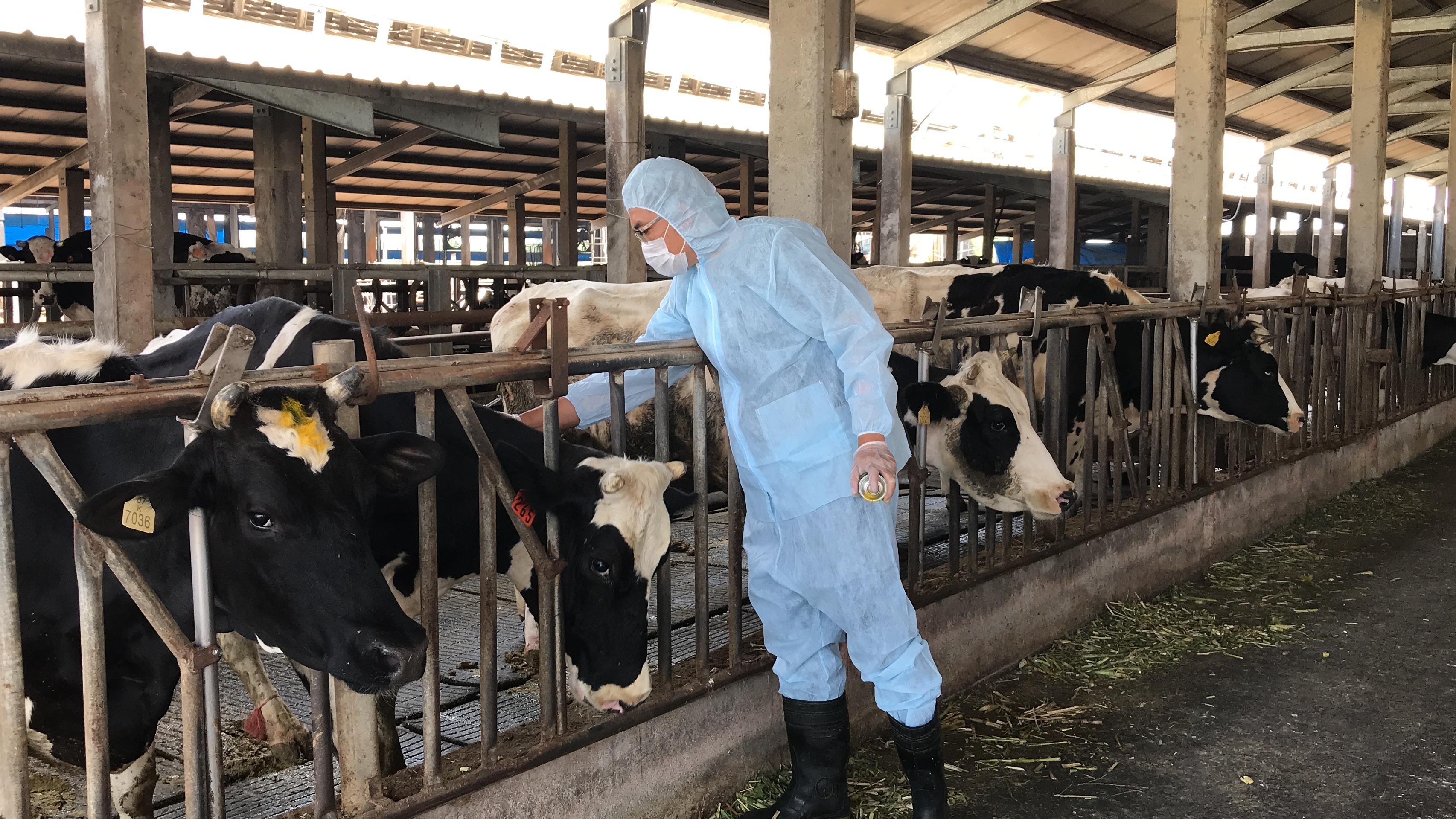 彰化縣4月30日完成牛結節疹疫苗注射工作,籲請縣內養牛場持續強化生物安全防疫工作,落實防疫零死角