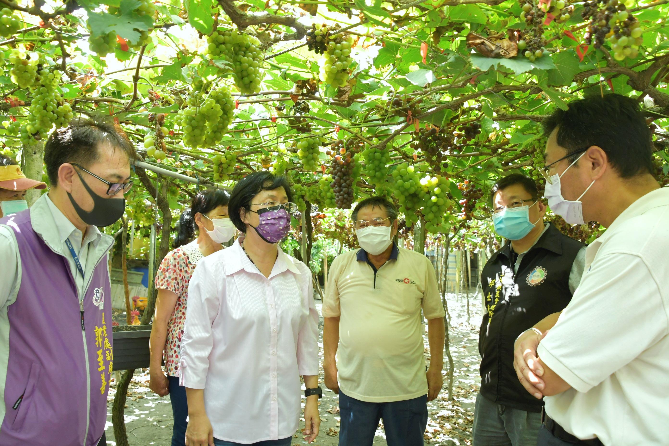 【產業關懷】農產業關心行程-關心釀酒葡萄產業